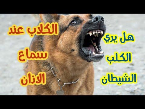 هل تعلم سبب نباح الكلاب والدليل من احاديث النبي صلي الله عليه وسلم Youtube