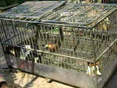 Trại chó Hòa Nguyên