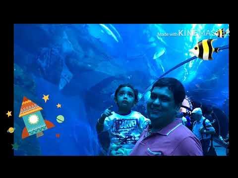 Parin @ Dubai Aquarium & Underwater Zoo