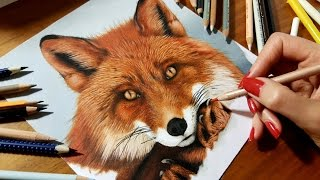 Speed Drawing of a Red Fox - Colored Pencil Artwork  | Jasmina Susak