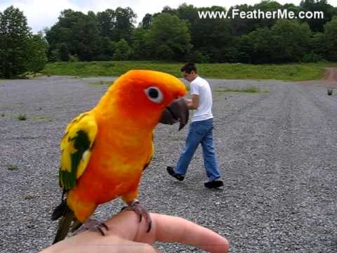 Teach A Parrot To Fly Outside