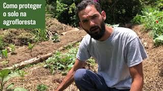 Como fazer cobertura do solo na Agrofloresta