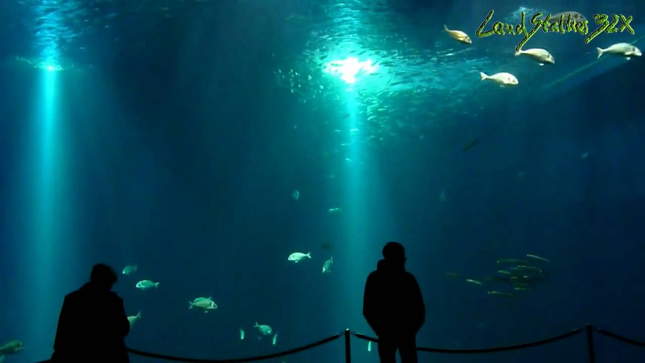 ozeaneum in stralsund monstertank the biggest aquarium in germany youtube. Black Bedroom Furniture Sets. Home Design Ideas