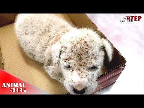 Stray Puppy Was Attacked By Ants And Covered Whole of His Body