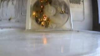 Microwave Fun - Don't Try This At Home