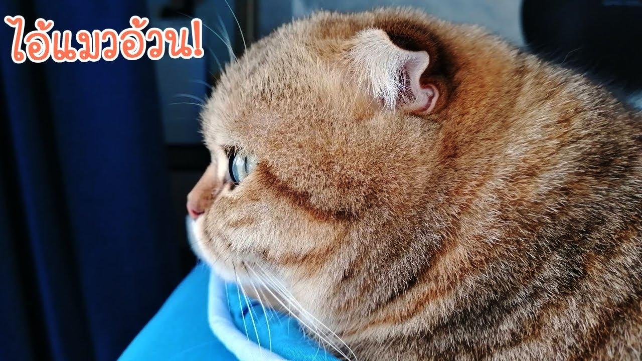 ทำไม? แมวเราอ้วนขึ้น┃จุ้มแบ๊ะแมวไม่ยิ้ม