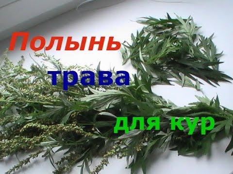 ПОЛЫНЬ больше чем трава...