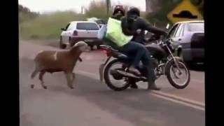 WhatsApp funny Videos   Try not to grin or Laugh   Funny Indian Hindi Videos Compilation 2