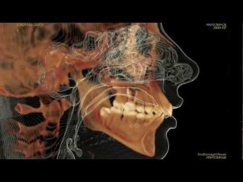 Cone Beam CT 3D Imaging