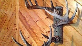 How to: Deer Antler Hat Rack