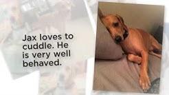 Dachsador Dog For Adoption Phoenix AZ   Adopt Labrador Retriever Dachshund Mix Dog Chandler Arizona