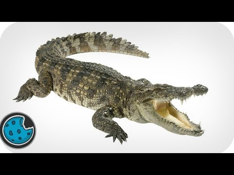 Incredibly Realistic Crocodile Animation