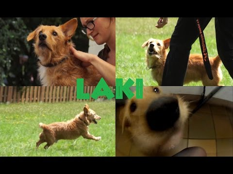 Vermittlungsvideo Laki (Vermittelt)