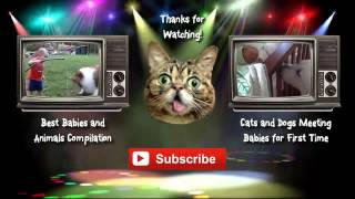Funny Cats Compilation [Most See] Funny Cat Videos Ever Part 1