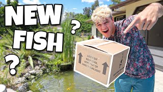 NEW *MYSTERY* KOI FISH SHOWED UP at My HOUSE?!!