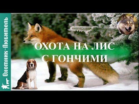 Охота с гончими на Кубани - Охота