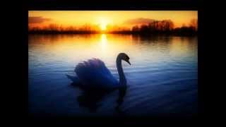 Неимоверно красивое видео - В мире животных