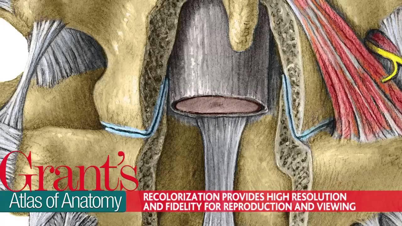 Grant\'s Atlas of Anatomy - YouTube