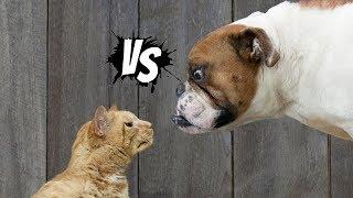 Faze Comice Caini vs pisici, animale haioase,la Copilul destept