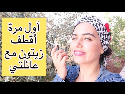 أول مرة أقطف زيتون أنا وعائلتي في فلسطين. أحلى أجواء 😍