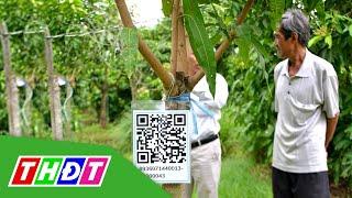 TP.Cao Lãnh cấp Chứng nhận cho 17 mã vùng trồng xoài mới | THDT