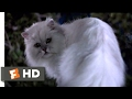 Stuart Little (1999) - Not Bad For A House Cat (10/10) | Movieclips