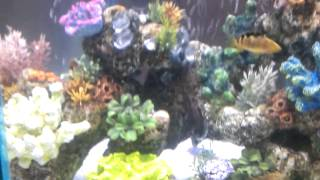 40 Gallon Hex African Cichlid Tank