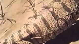 "Видео ""Серый варан""_зоология"
