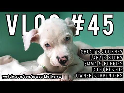 New York Bully Crew | VLOG #45