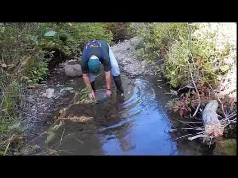 S4E3 Washington State Gold Mining - Prospecting a Stream in