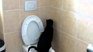 Бывают же умные  коты