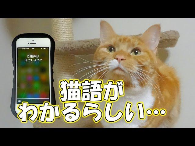 猫語が分かると嘘をつく人工知能Siri - Siri maintains she can understand cat language –