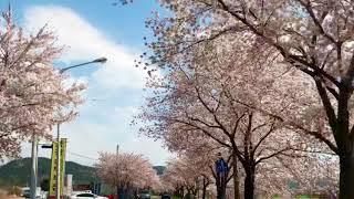 201904 경주 벚꽃놀이 이쁜하늘