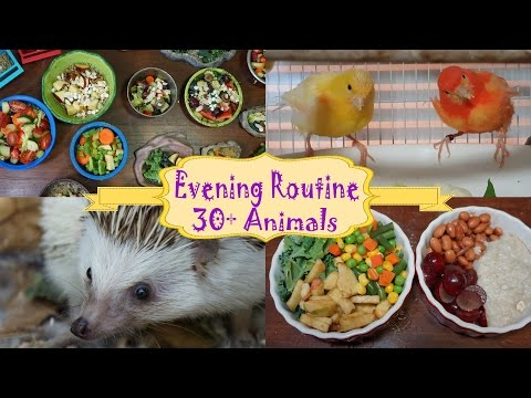 Evening Routine Feeding My Pets