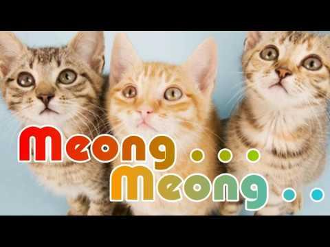 Kucing Meong Meong ~ Musik Untuk Anak Anak