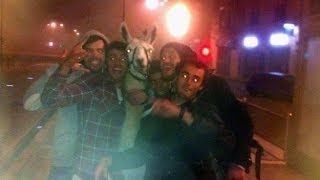 Drunk French Teens Party With Llama!