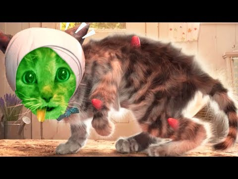 Play Fun Costume Dress-Up Party - Little Kitten Adventures - Educational Games For Children