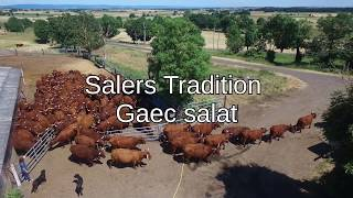 Vaches Salers Gaec Salat [Dji Phantom 3] | HD