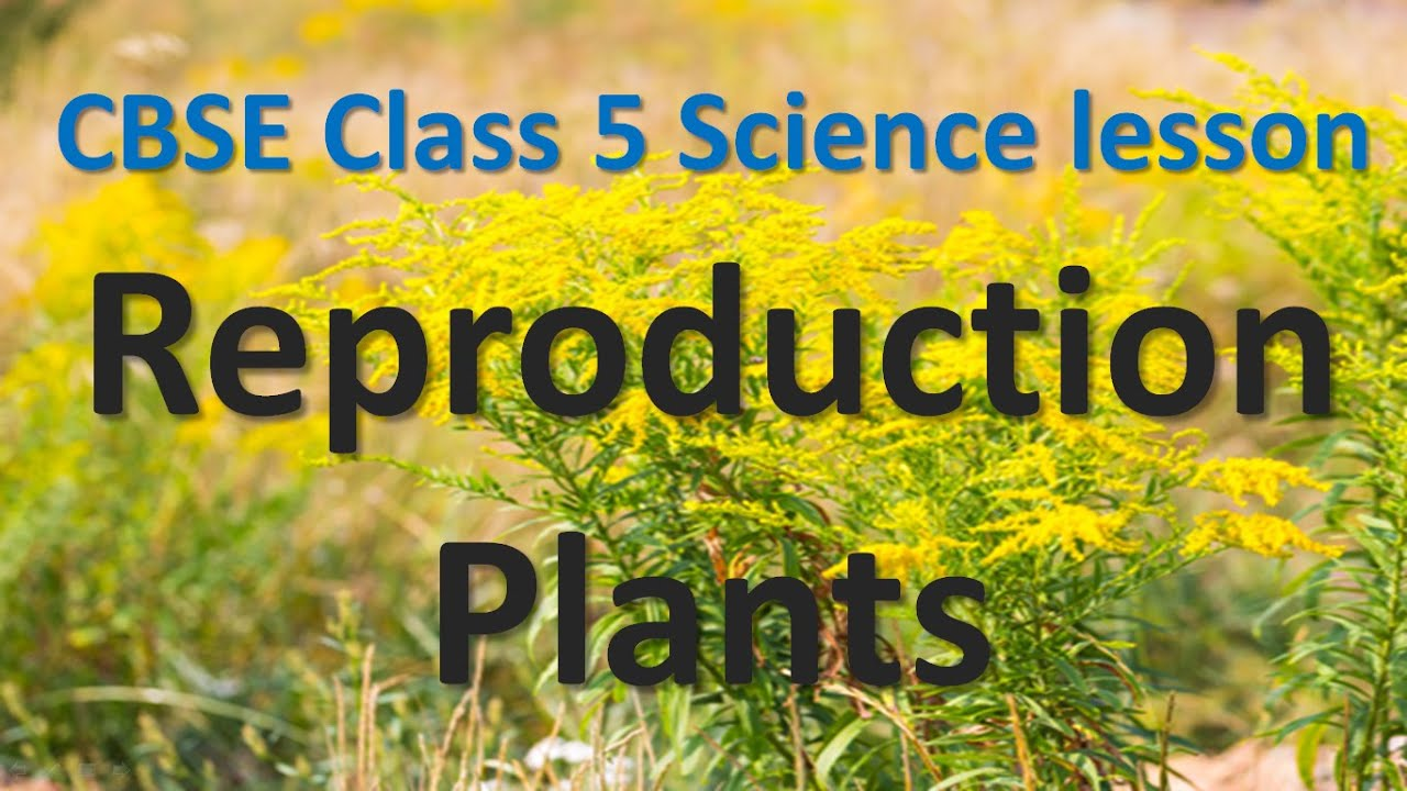 Cbse Class 5 Science Lesson Reproduction Plants Youtube