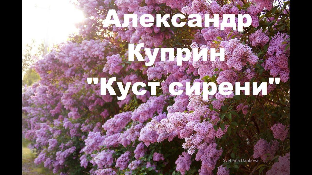 [Аудио] Александр Куприн -