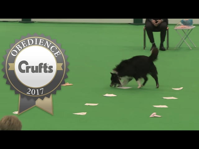 Obedience Championship - Dogs - Scent - Part 4 | Crufts 2017