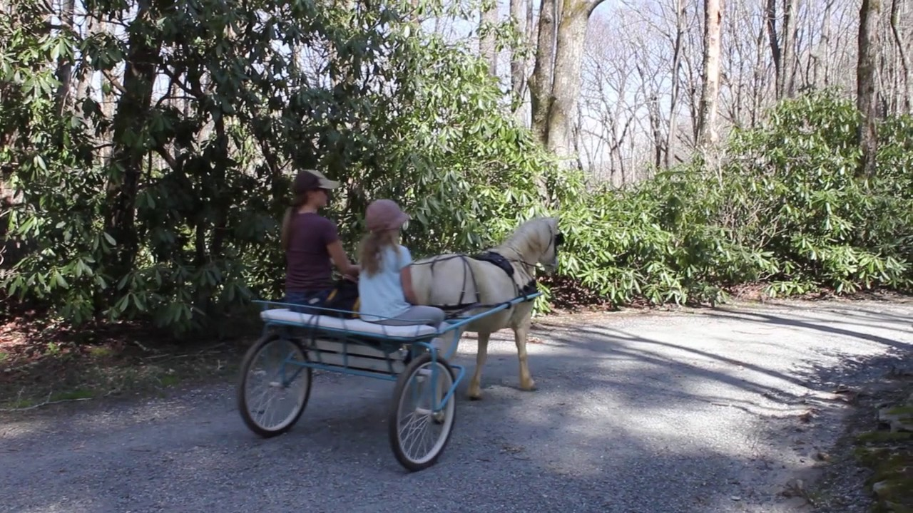 pony carts and harnesses
