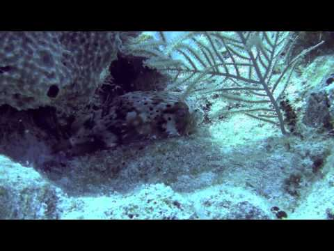Grand Turk Scuba Diving Trip - May 2012