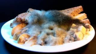 Raspberry Pi Time Lapse of Mold Growth on Food