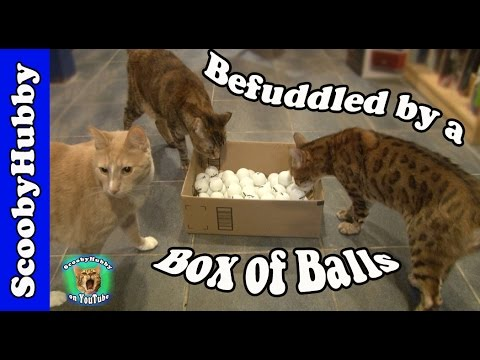 Befuddled by a Box of Balls -- Cat Clips #327
