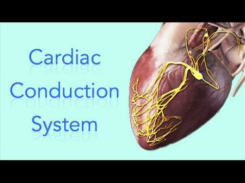 Cardiac conduction system electrical system of the heart animation cardiac conduction system electrical system of the heart animation made easy youtube ccuart Images
