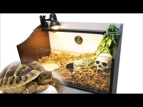 Сухопутные черепахи. Полная информацию по уходу в домашних условиях.