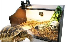видео Содержание черепахи в домашних условиях