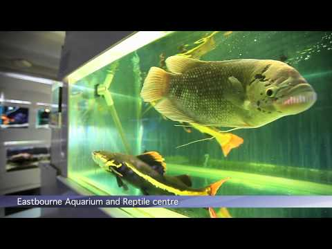 PFK Shoptour: Eastbourne Aquarium And Reptile Centre, East Sussex