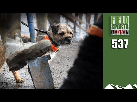 Fieldsports Britain - Ratting Riot